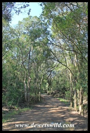 Near the beach, a short dirt road allows easier access to the dune forest