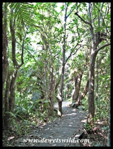 The boardwalk through the swamp forest at the Kosi Palm Monument
