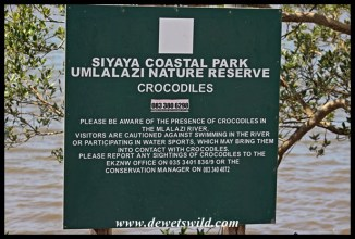 Beware the crocodiles!