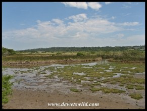 Salt marshes inundated with the high tide