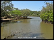Stands of mangroves line inlets and islands