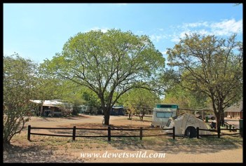 Lower Sabie camping area