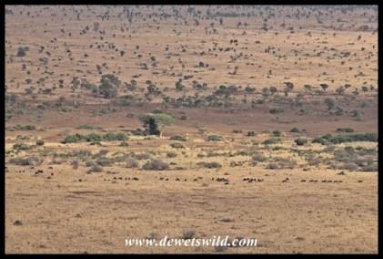 Herd of wildebeest far below Nkumbe viewpoint