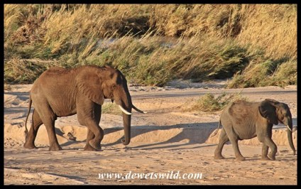 Elephants on the move in the Sabie