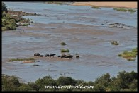 Elephants in the river below Olifants