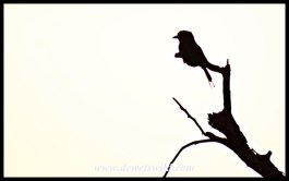 Lilac Breasted Roller silhouette