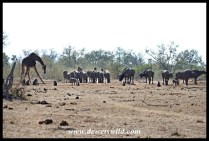 Congregating at the waterhole