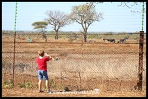 Taking in the wildlife and scenery from Satara's boundary fence