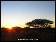 Mokala sunrise