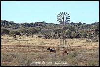 Tsessebe at a windpump near Mosu