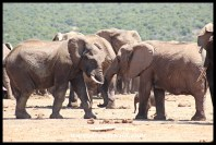 Elephant interaction at Hapoor