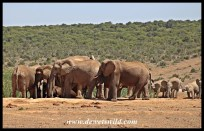 The next day, as we passed Hapoor, the elephants were getting together again