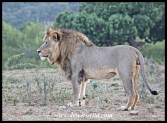 Kings of Addo