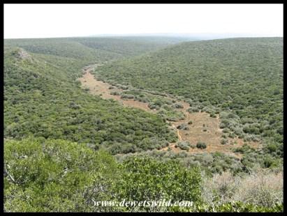 Addo Elephant National Park scenery