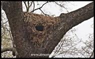 Hamerkop Nest