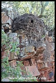Hamerkop nest on a cliff