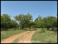 Track through Dinokeng Game Reserve