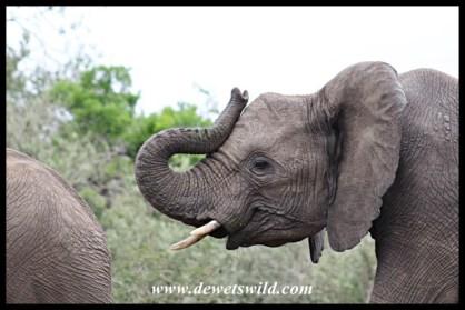 Elephant trickster