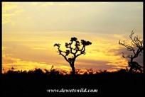 Sunrise over Imfolozi