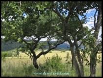 Loskop scenery
