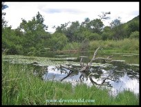 Lily Dam Hide in Loskop Dam Nature Reserve