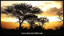 uMkhuze sunset