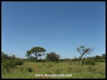 uMkhuze scenery