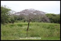 At Kumahlala Hide