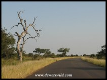 Satara scenery