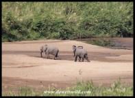 Baby elephant fun - Hluhluwe-Imfolozi Park