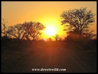 Umfolozi sunset