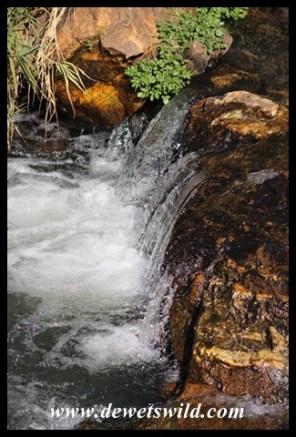 Scenery at Walter Sisulu National Botanical Garden