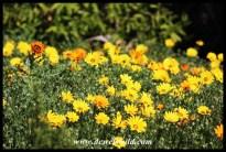 Splendid flowers at Walter Sisulu National Botanical Garden