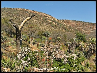 Splendid gardens at Walter Sisulu National Botanical Garden