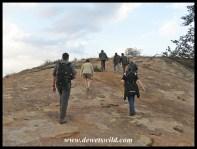 Climbing a koppie (rocky hill)