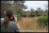 More encounters with buffalo