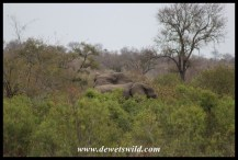 Elephants near Napi base camp