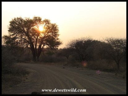 Dusty road at sunset