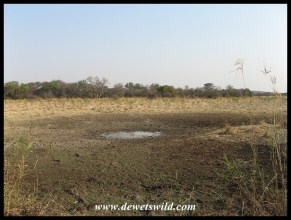 A litle pond is all that remains presently at Jacana Hide - hopefully the rains are not far off!