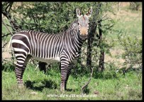 The Star Attraction at Mountain Zebra National Park
