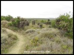 Aloe Hill Trail
