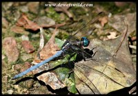 Dragonfly in the forest