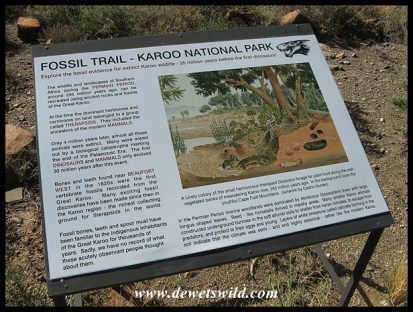 Karoo National Park's Fossil Trail