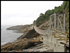 Suspension Bridges at Storms River Mouth