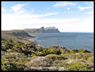 Scenery at Cape Point, Table Mountain National Park