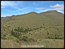 Scenery at Mountain Zebra National Park
