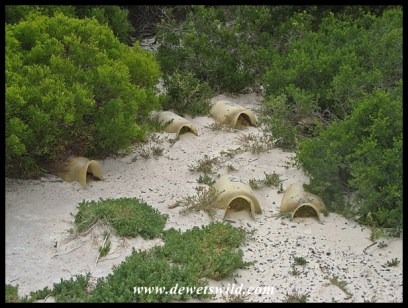 Artificial nest boxes for the penguins at Boulders