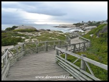 Boardwalk leading to the penguins