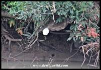 Foam Nest Frog nest