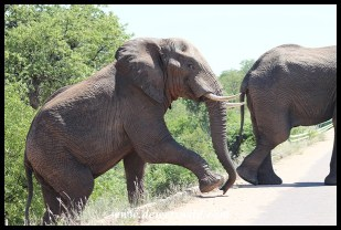 Elephants on the way to Phalaborwa Gate